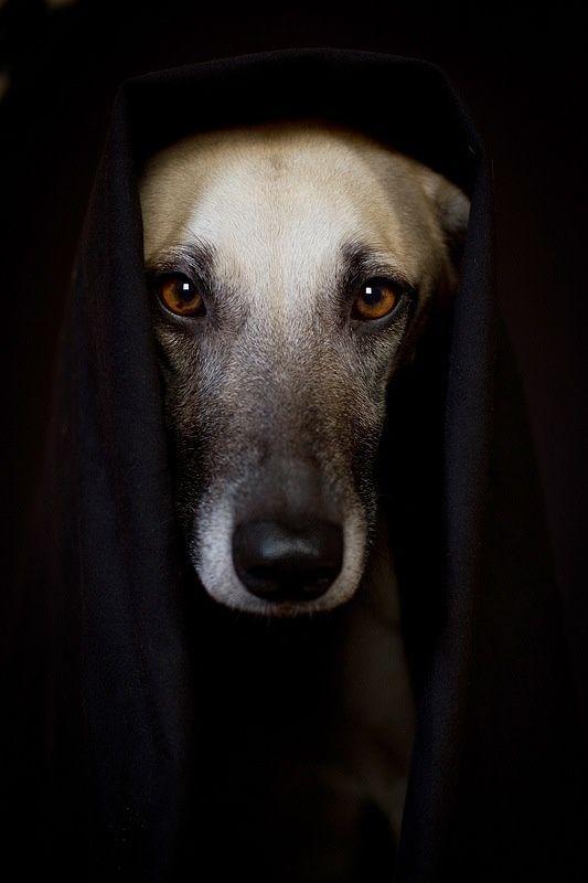 chien mystérieux