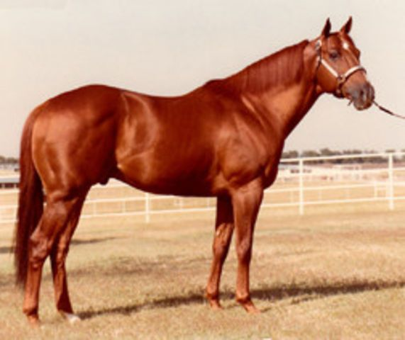 Mr. Crimson Ruler. Son of Secretariat, born 1975. I don't think he did much, but he looks like his handsome dad! The Sport Horse Show and Breed Database