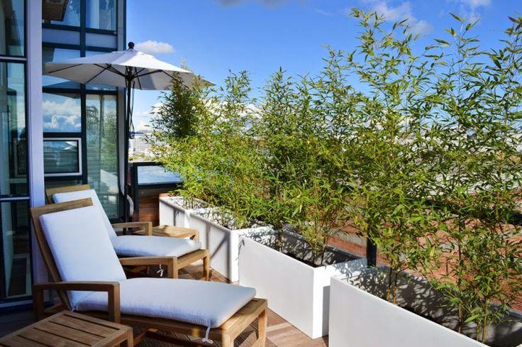 Bambus w donicy na balkonie lub tarasie   Bambusowy sen - wszystko o bambusach ogrodowych i palmach