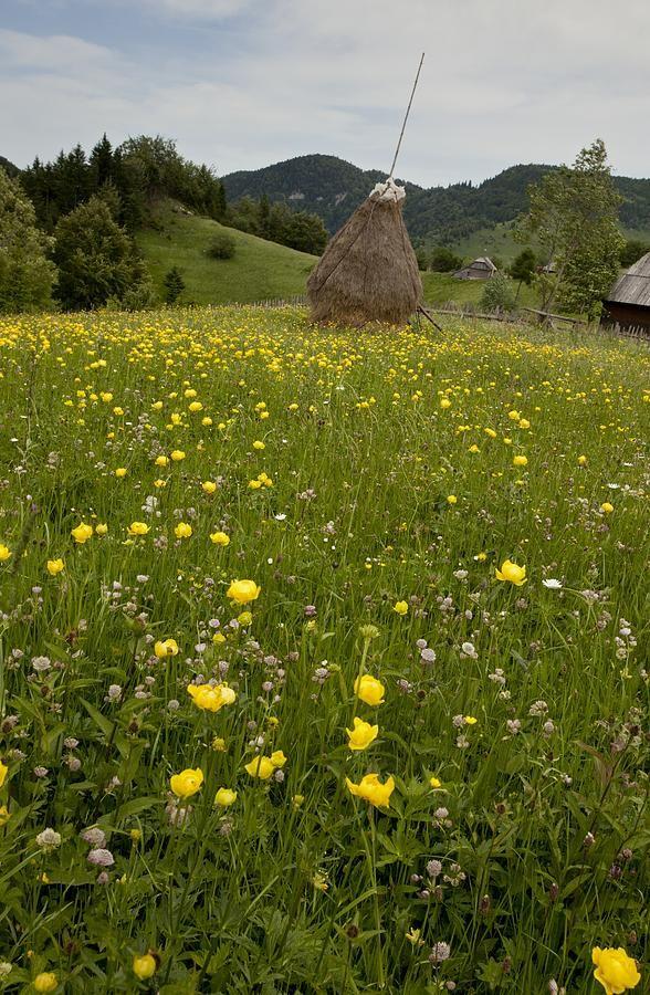 Piatra Craiului Mountains, Romania. Photograph