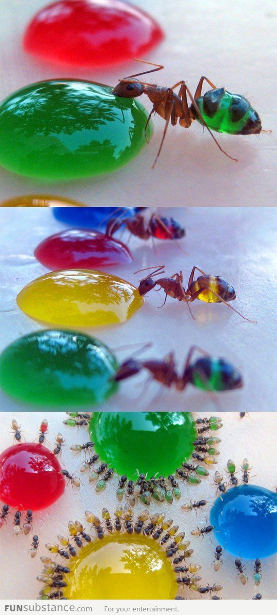Colorful ants...THIS IS SOOO COOL