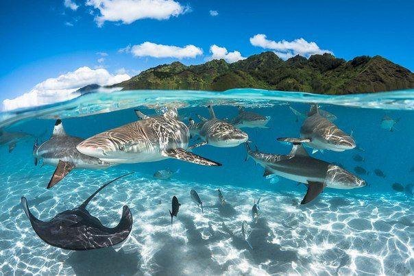 Лагуна, Французская Полинезия