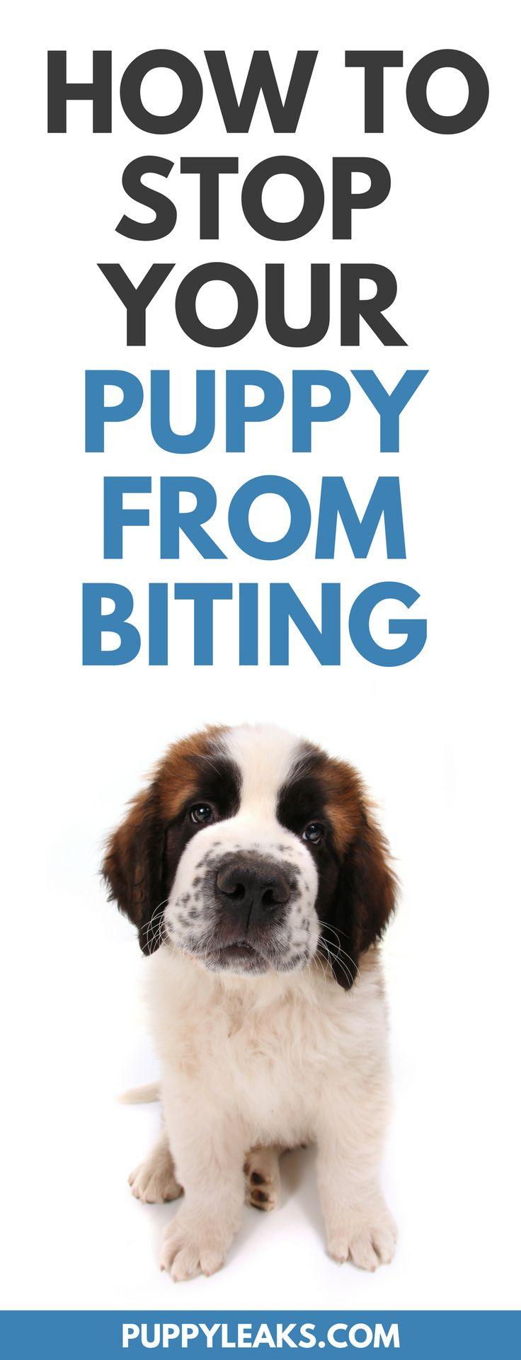 Does your puppy bite and nip at your hands? Do they grab onto your clothing and refuse to let go? Teaching bite inhibition to a pup is no fun, but there are some methods that work. Here's 3 tips for teaching your puppy to stop biting. #puppy #puppytraining #dogs #dogtraining #dogtips #dogcare #dogadvice