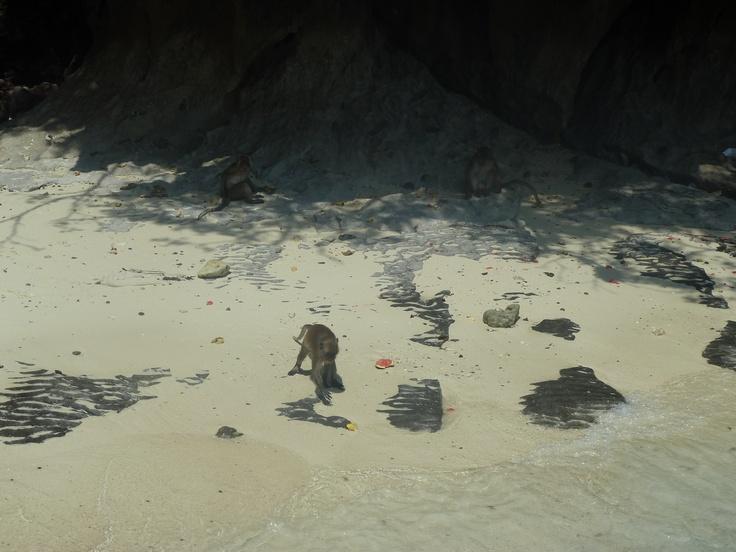 monkey island- the beach movie