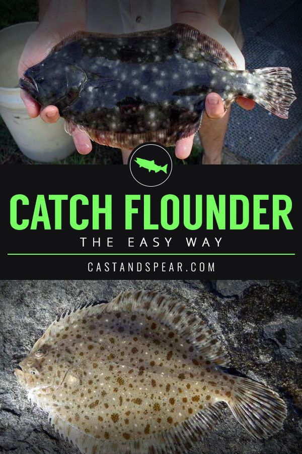 Flounder Fishing Tips If You Re Looking To Catch Flounder Then You Re In Luck Use This Guide To Help You Catch More D Flounder Fishing Fishing Tips Flounder