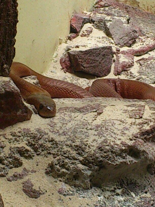 Otra serpiente Another Snake