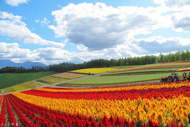 北海道 美瑛 四季彩の丘