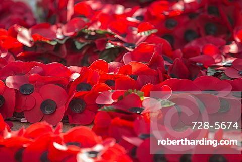 Poppies at War Memorial, London, England, United Kingdom, Europe