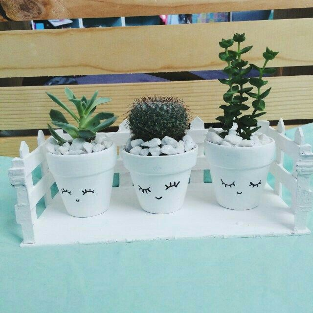 Cute little plants in cute little potters