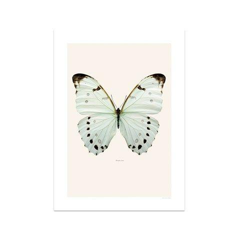 Morpholuna print print