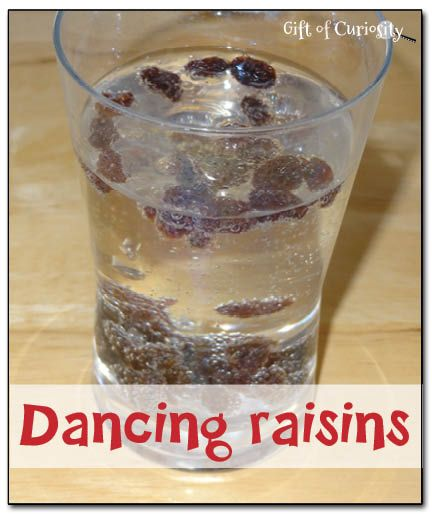 Dancing raisins experiment - you'll be amazed at how much you can get your raisins to dance in a glass of carbonated liquid! #preschool #science  - Gift of Curiosity