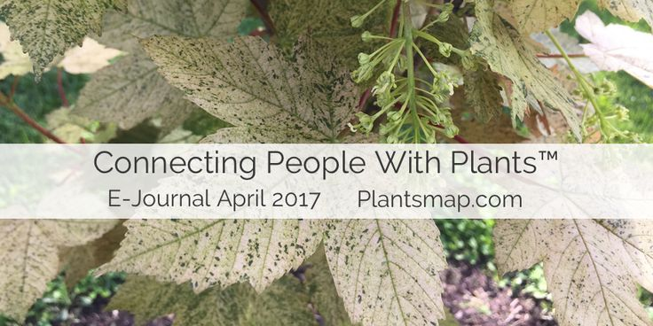 Plants Map Connecting People With Plants E-Journal April 2017: Trees, Arboreta, Developer Updates, ArbNet, Arbor Day and more