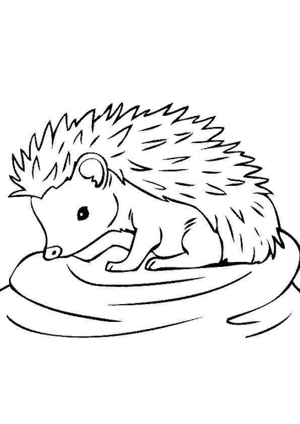 Baby Hedgehog Coloring Page Hedgehog Colors Coloring Pages Baby Hedgehog