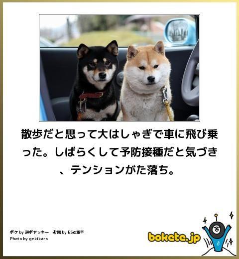 犬,bokete,秀逸,ボケ,まとめ082