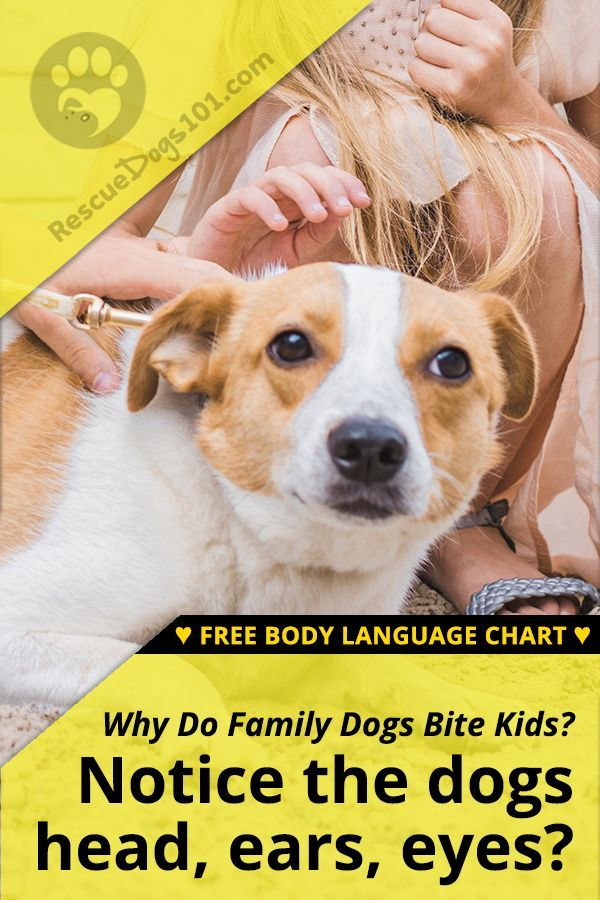 Family Dogs That Bite Kids Family Dogs Dog Training Dogs Kids