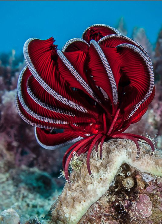 Feather starfish - it is beautiful.