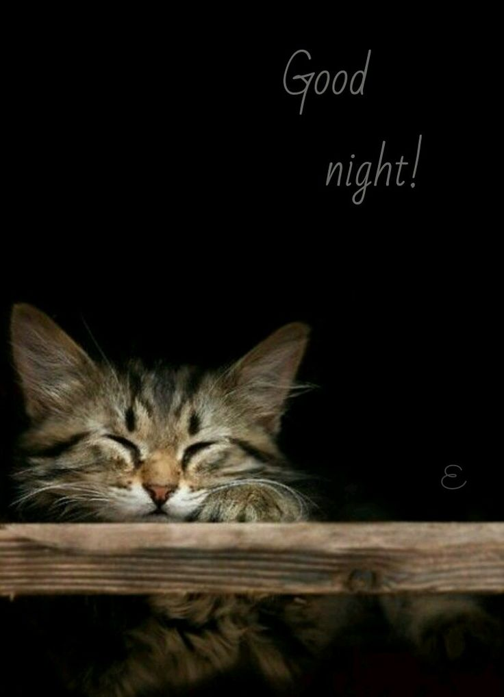 Night Cat Productions: 193 Best Good Night Images On Pinterest