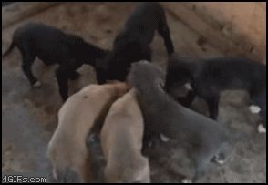 Your puppy will absolutely FLIP for the new taste of Purina puppy chow! (it's a gif, click to see it in action!)
