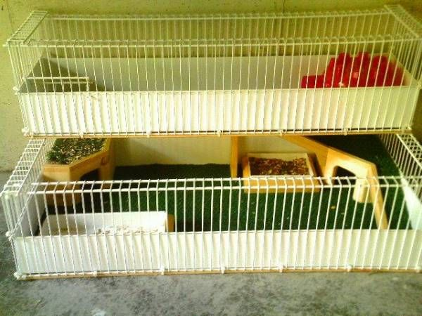 104 best images about guinea piggy on pinterest cavy for Wire guinea pig cages