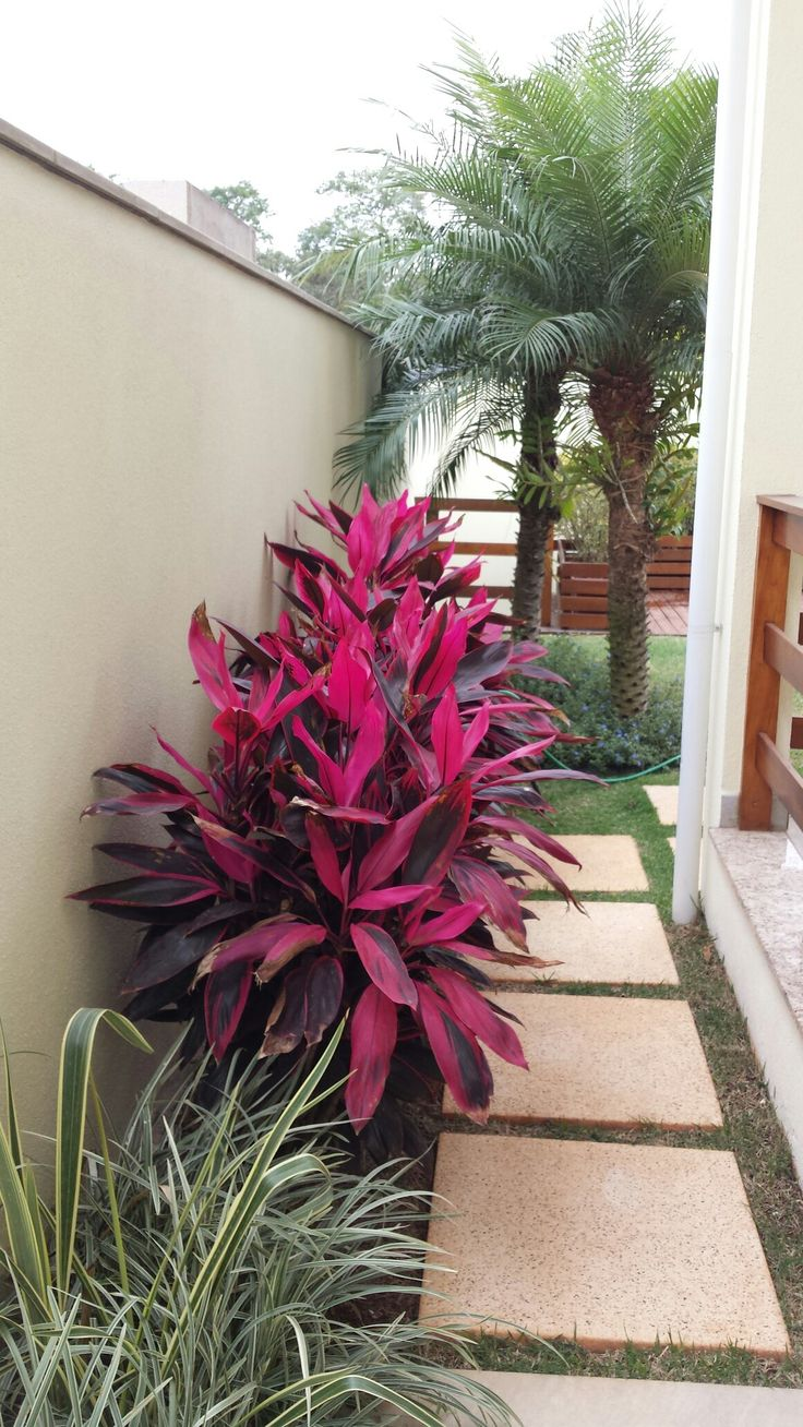viaverde paisagismo (cordyline fruticosa)
