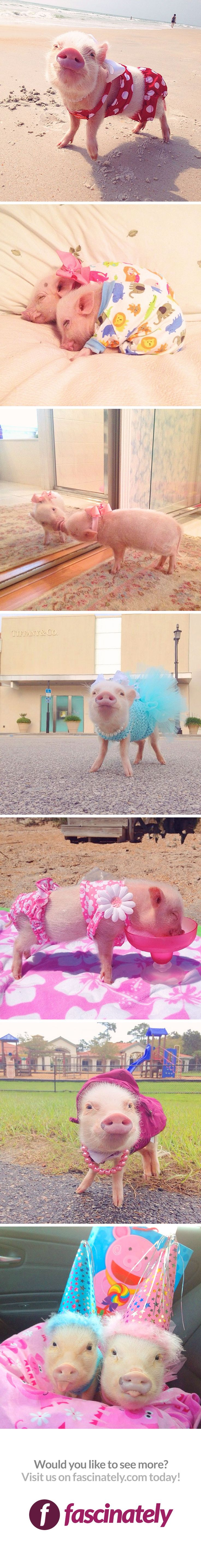 Meet the most adorable, popular pig on instagram! She's pretty stylish, too - she loves to lay out on the beach and pose in her cute clothes!
