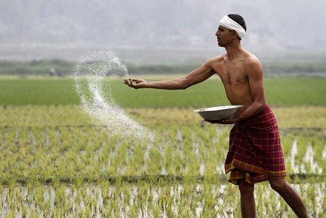 Un modello #agricolo che uccide l' #India. Il sistema industriale agroalimentare porta i #contadini in una trappola del #debito che crea #malnutrizione. La soluzione sta nel passare da un sistema tossico e costoso a un modello di produzione #sostenibile ed accessibile alle fasce più #deboli della popolazione.