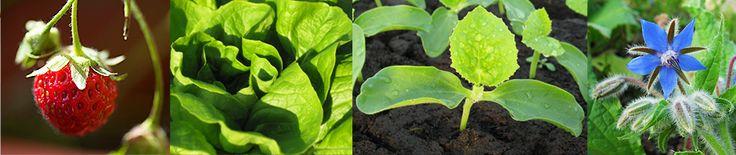 Les Papilles Estomaquées…   Que faire avec le contenu en légumes, fruits et plantes de mon panier?