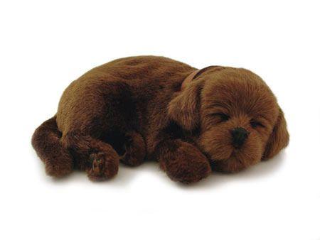 Chocolate Lab Sleeping Pet