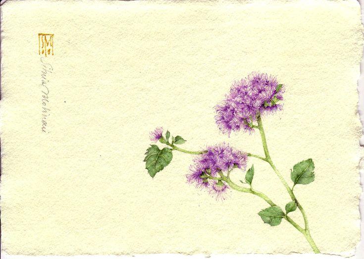 AGERATO. acquerello su carta a mano, 14x21 cm circa, anno 2008