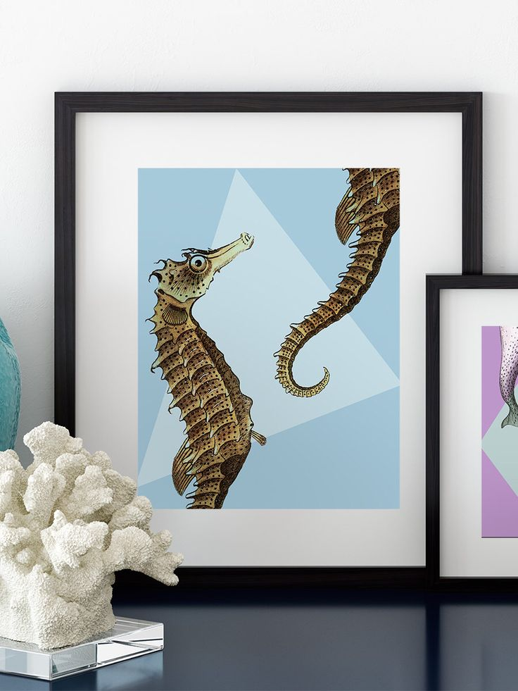 Seahorse Wall Art 2105 best for the wall images on pinterest | frames, architecture