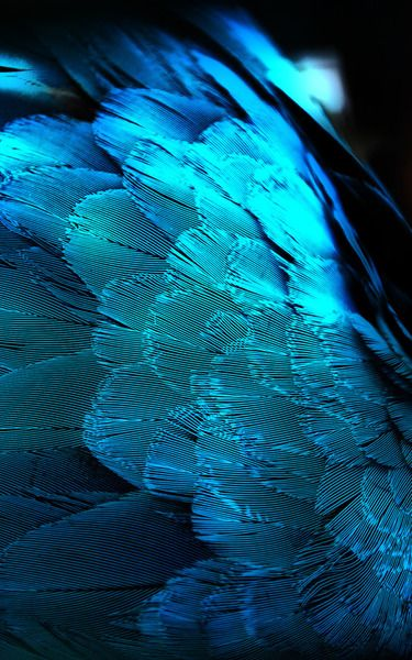 Feathers. Not only do they have breathtaking beauty but they also have incredibly state of the art technology, and their engineering is so beautifully designed for flying, not even the best aircrafts can match their aerodynamic qualities.