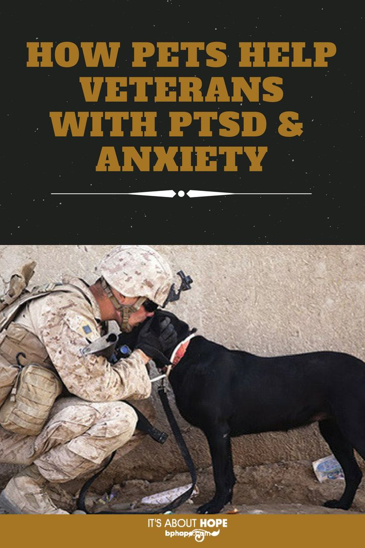 Research has found therapeutic effects of service dogs on the mental health of military veterans; read on: