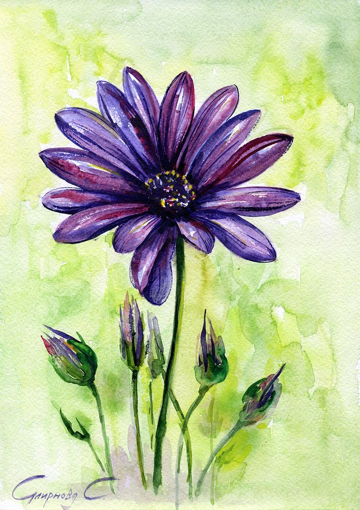 Purple daisy, daisies, Flowers, Watercolor Original ...