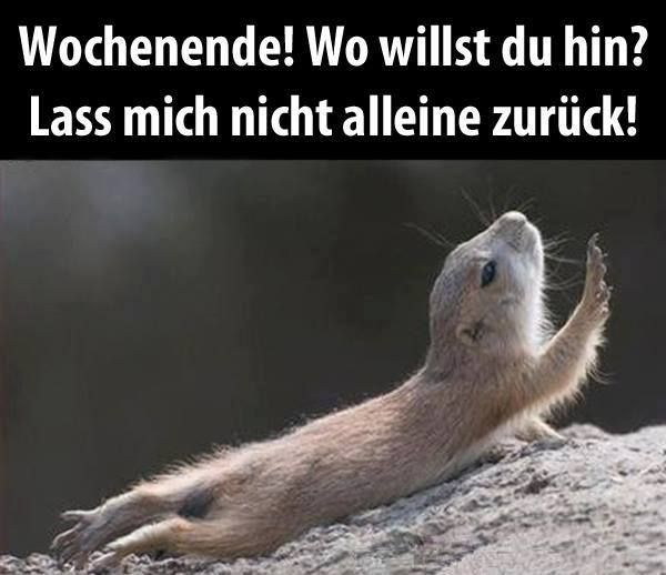 bleib bei mir Wochenende Stay with me, weekend! Weekend! Where are you going? Do not leave me alone, come back!