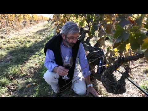 Barossa Rare & Distinguished: Henschke Wines. Video & Photography by Dragan Radocaj.  Copyright Barossa Grape & Wine Association.