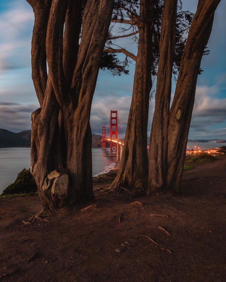 Golden Gate Park #sanfrancisco #sf #bayarea #alwayssf #goldengatebridge #goldengate #alcatraz #california