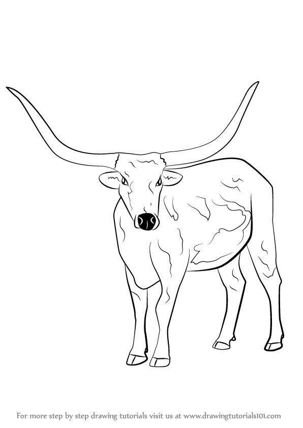 Learn How To Draw A Longhorn Cattle Farm Animals Step By