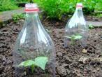 Mini Treibhaus und Schneckenhaus in einem. PET-Flaschen für den Kräutergarten