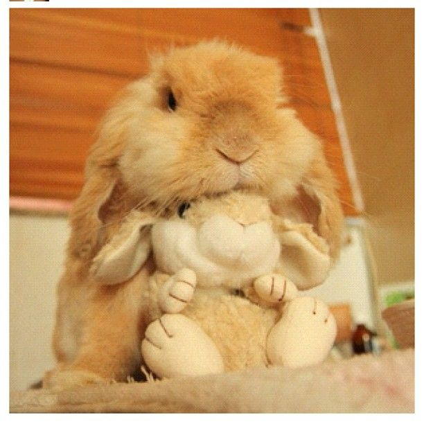 Rabbit and his stuffed friend - holy crap I just died from the cuteness.