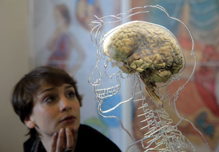 Just How Big Is the Human Brain?