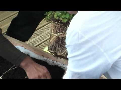 Jardiner: réaliser un potager en carre