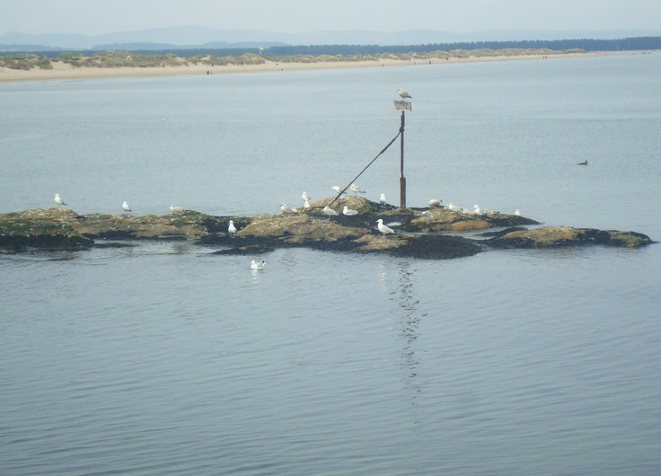 A group of seagulls rested on a rocky islet.--- in St.Andrews
