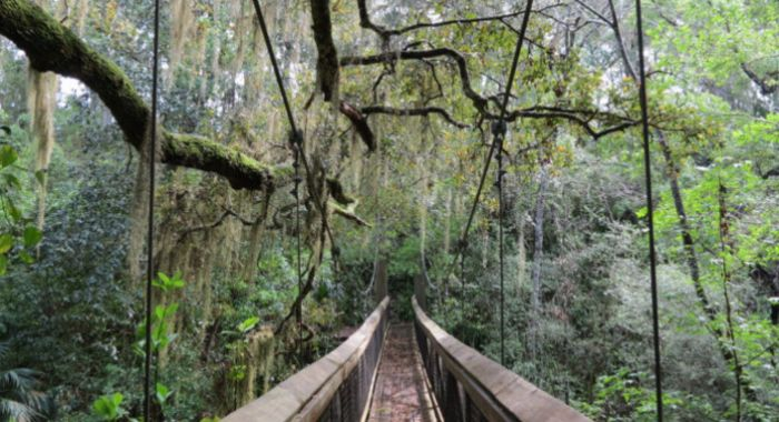 This Ravine Walk In Florida Will Make Your Stomach Drop