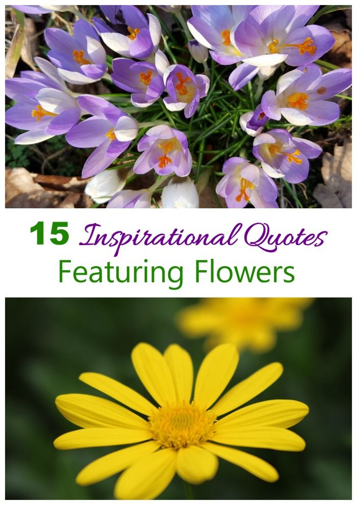 These inspirational flower quotes are both beautiful to look at but also motivational and a great way to start your day.