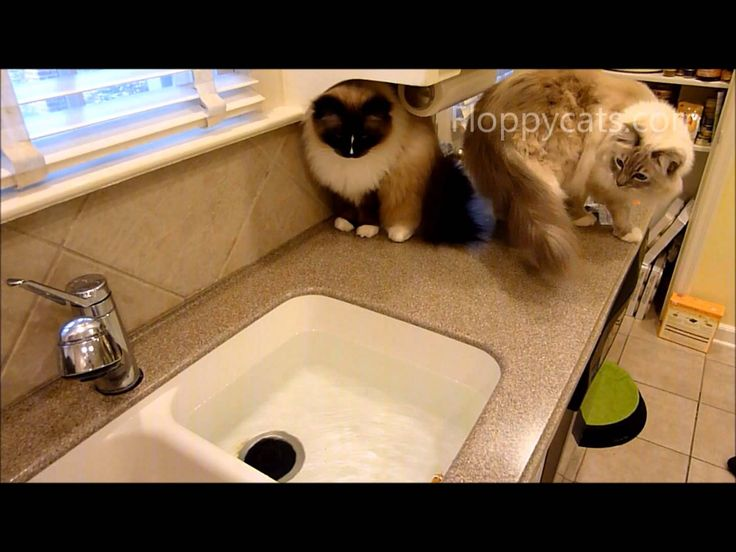 Cat Toy Fish Game : Best electronic cat toys images on pinterest ragdoll