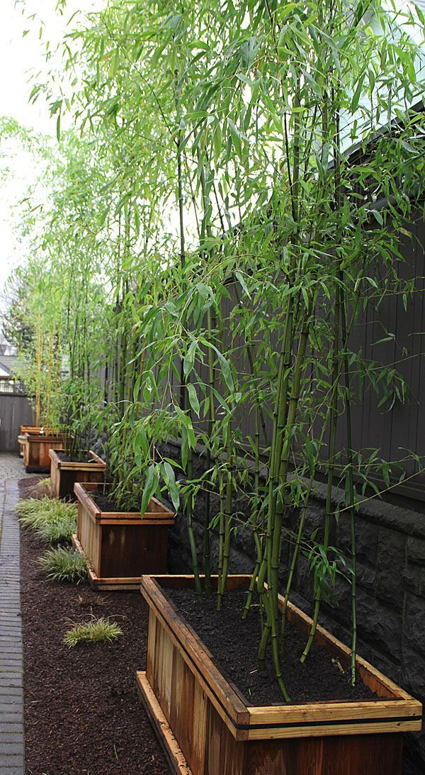 I've wanted to bring some bamboo home from mom's, but I know how it can get out of hand and take over. This would stop that.
