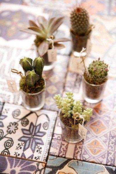 Pequenas mudinhas de cactus dão lindas lembrancinhas de casamento para eco-wedding!