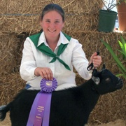 Prize-winning goat at the Marin County Fair.
