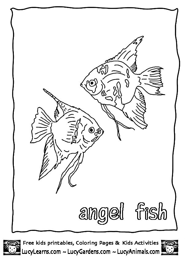 Tropical Angel Fish Coloring Page