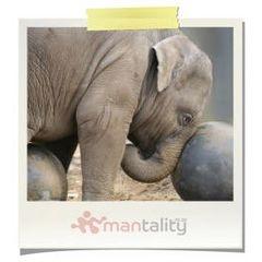 Elephant Encounter & Dinner for 2 Experience